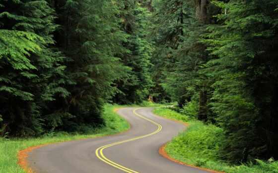 природа, дорога, лесу
