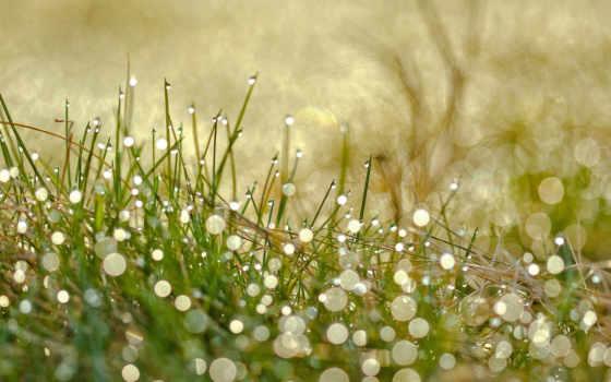 трава, капли, drops