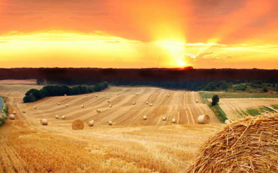 стог, солома, поле, сено, закат, деревя, sun,
