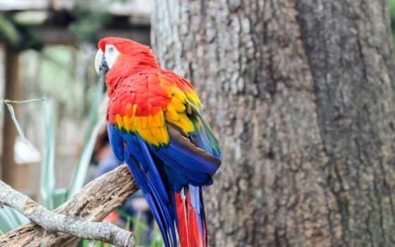 попугай, птица, color
