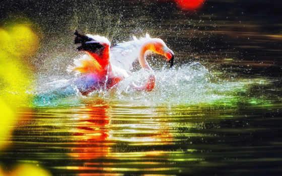 фламинго, птица, water,
