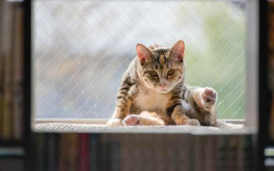 кот, окно, сидит