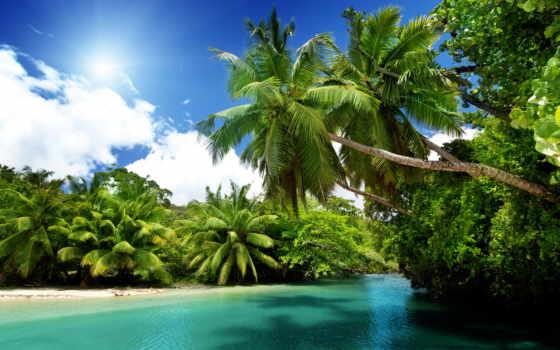 природа, море, пальмы