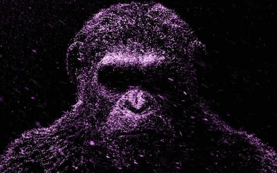 desktop, panasonic, sfondi, uhd, apes, war, purple, flowers,