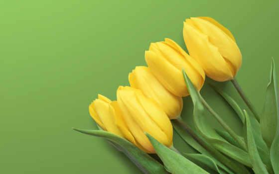 yellow, tulips, flowers, desktop, resolutions, mobile,