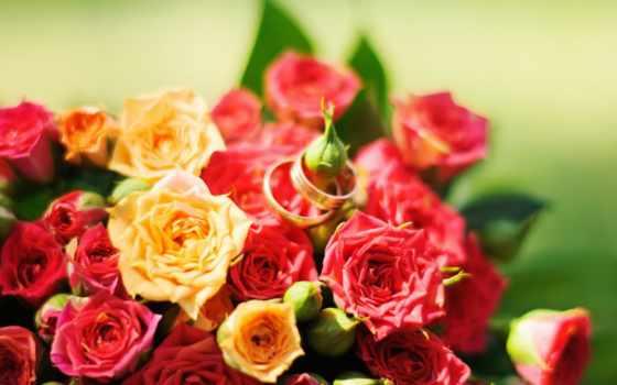 flowers, red, роза, yellow, cvety, красные, желтые, розы, roses,