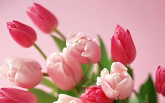 martha, день, праздник, женский, коллекция, международный, поздравление, тюльпан, new, postcard, cvety