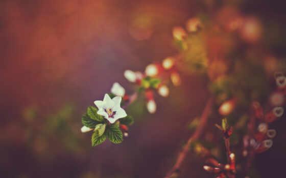 лето, весна, от
