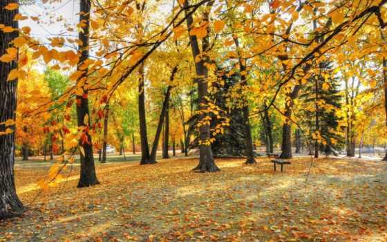 park, осень, деревья