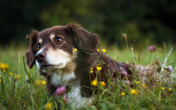 собака, природа, друг