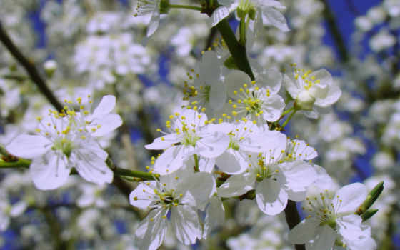petals, лепестки, flowers