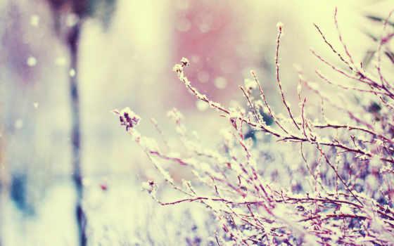 макро, winter, блики