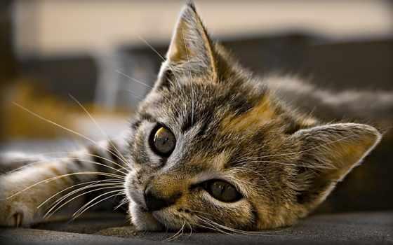 тюлень, small, кот, котенок, замовити, ушки, заказать, walldeco, подарках, котики,