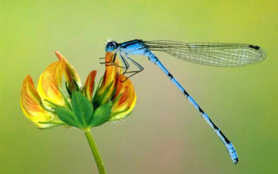 насекомые, стрекоза, природа, стрекозы, zhivotnye, насекомых, макро,