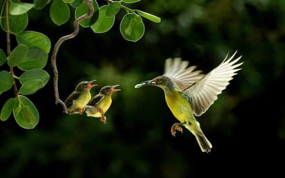 колибри, птица, птенцы, branch, корм, птицы, colibri, еда,