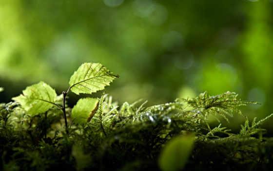 природа, коллекция, макро, зелёный, яndex, природы, коллекциях,