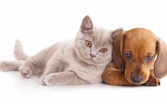 интернет, магазин, zootovar, gato, нашем, биг, petfood, animal, product, купить, catalog