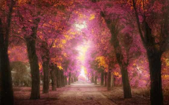 деревья, розовые