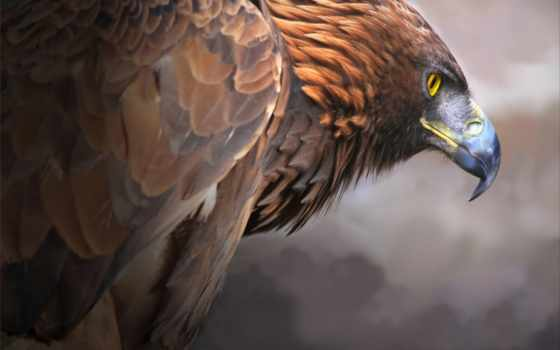 хищная птица, орел,