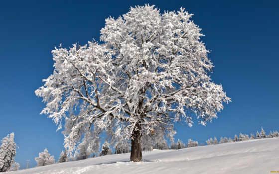 winter, дек, деревья