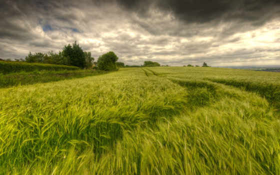 небо, природа, банка, зелене, футажи, video, хорошії, жито, that, пейзажи -, колоски,