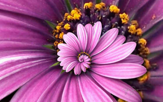 purple, цветы, flowers Фон № 113893 разрешение 1920x1200