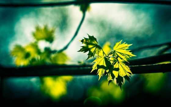 листва, quang, макро, nếu, tránh, tên, tới, cần, marathi,