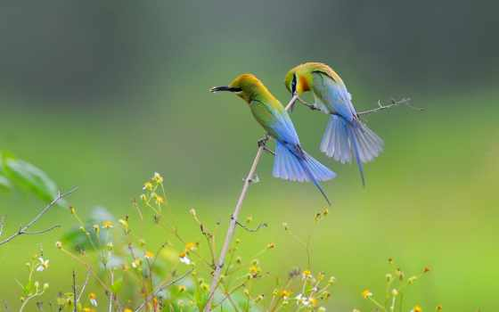 птица, pair, клюв, pinterest, trong, color, китоглав, birds,