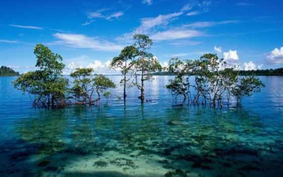 остров, havelock, andaman, islands, nicobar, посещение,