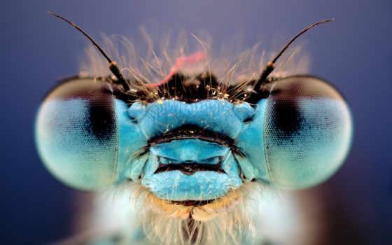 стрекоза, card, los, стрекозы, называют, глазами, сквозь, летунами, изысканными, стрекоз, голубыми,