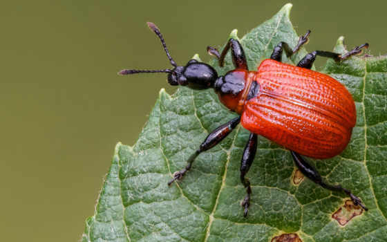 nasekomyi, жук, макро, насекомое, bugs, release, quantity, фон, animal, зелёный