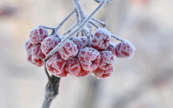 рябина, снег, winter, коллекция, тема, окно, иней, природа, уж, loaded, best