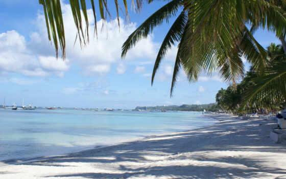 море, palm, природа, landscape, пляж