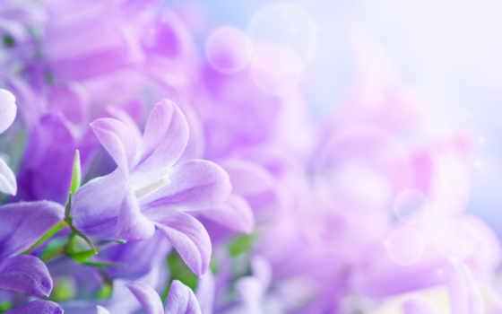 цветы, красивые, листки