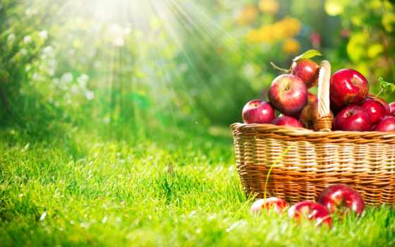 яблоки, фрукты, корзина