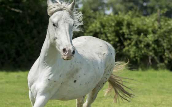лошадь, морда, run