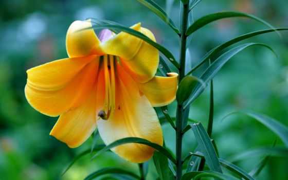 самые, цветы, красивые