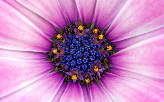 цветы, discover