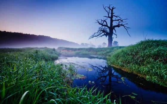 дуб, дерево, мертвое, старый, полировка, природа, stinger, ручей,