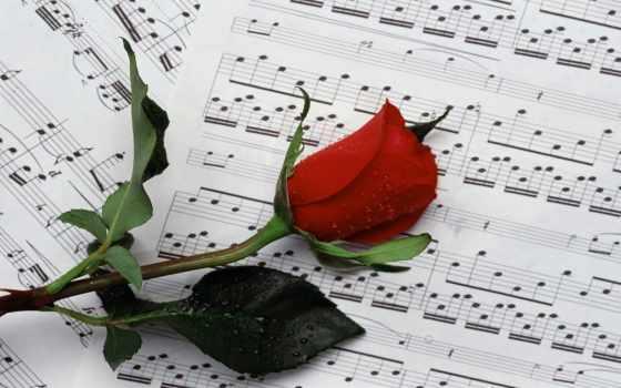 den, рожден, цветя, за, hoa, картички, hành, hương, bạn,