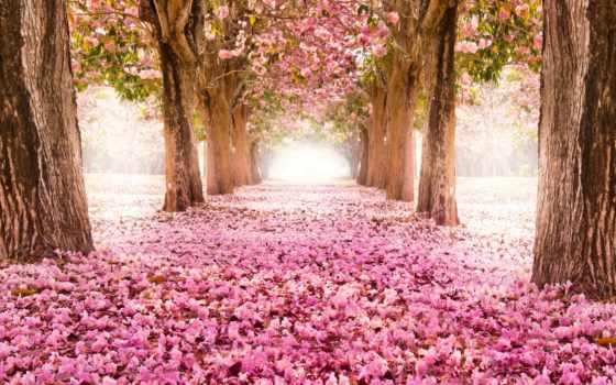 сердце, flowers, изображение, peace, esztike, pinterest, that,