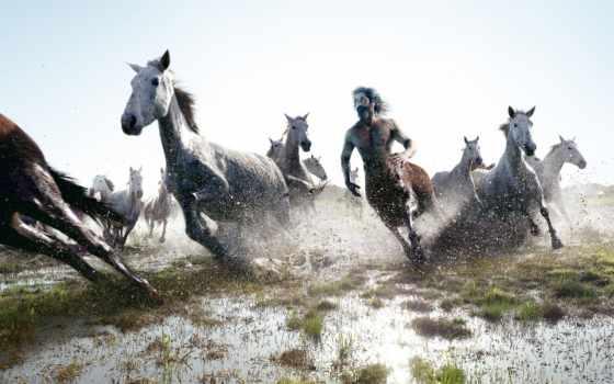 лошади, centaur, лошадей, табун, лошадь, among,