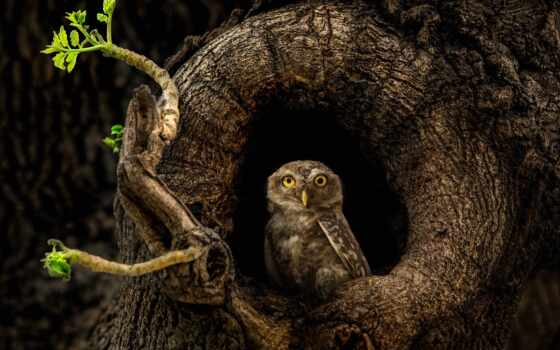 сова, scope, spot, animal, ложбинка, deny, svbony, птица, оригинал, дерево