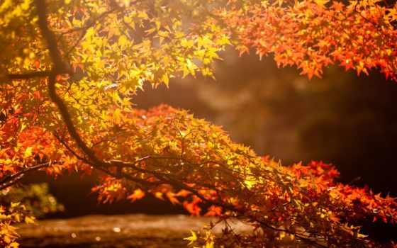 осень, солнце