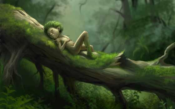 леса, лес, дух