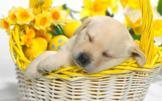 цветы, щенок, природа