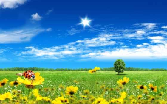 небо, цветы, коровка