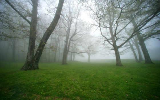 туман, деревя, лес