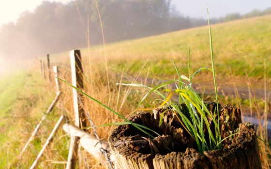 макро, трава, широкоформатные