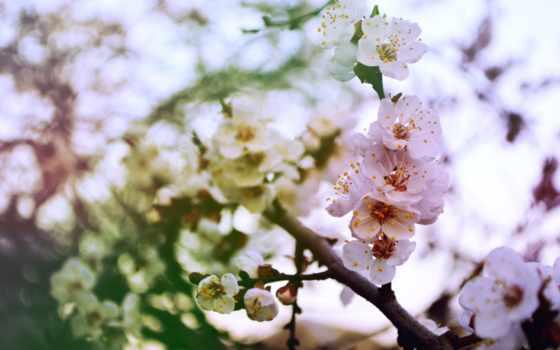 Цветы 103196